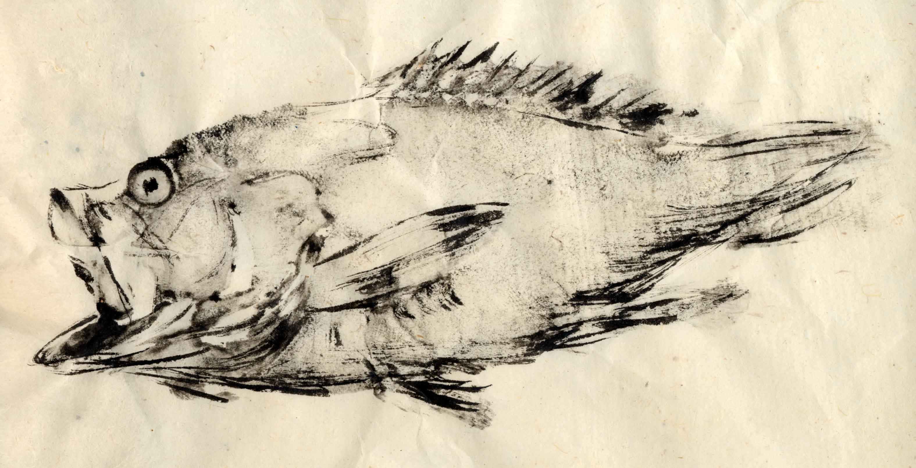 Marc granier peintre graveur for Prix poisson rouge 15 cm